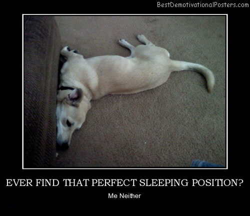 ever-find-that-perfect-sleeping-position-dog-flexible-best-demotivational-posters