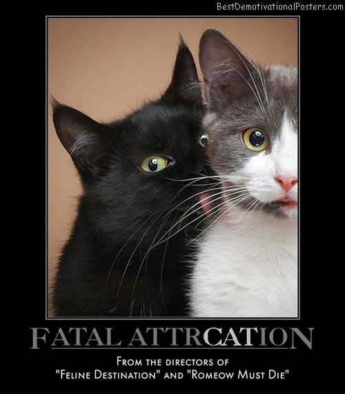 fatal-attrcation-cat-movie-best-demotivational-posters