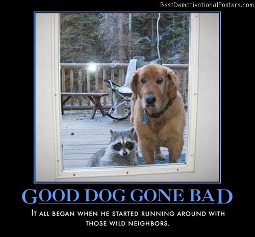 good-dog-gone-bad-best-demotivational-posters