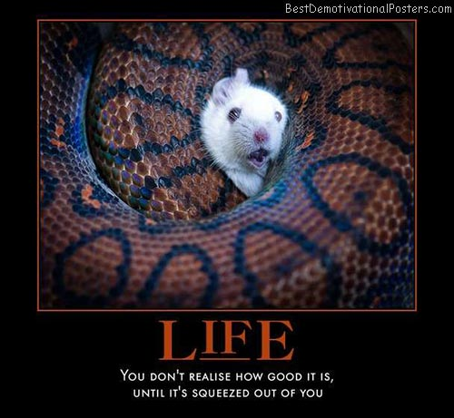 life-mouse-snake-squeeze-best-demotivational-posters
