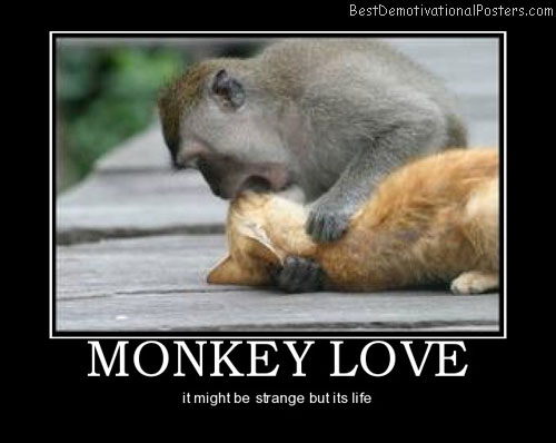 monkey-love-funny-and-loving-best-demotivational-posters