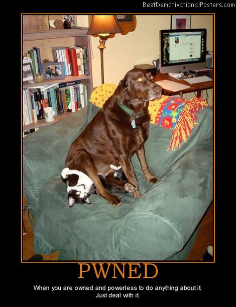 pwned-dogs-cats-best-demotivational-posters