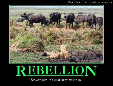 rebel-lion-animals-lions-best-demotivational-posters