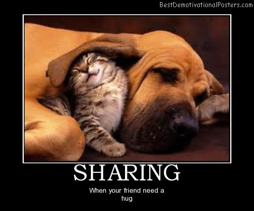 dog-and-cat-sharing-best-demotivational-posters