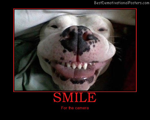 smile-dog-funny-best-demotivational-posters
