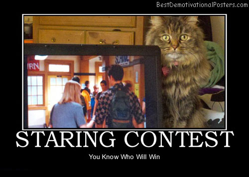 staring-contest-cat-best-demotivational-posters