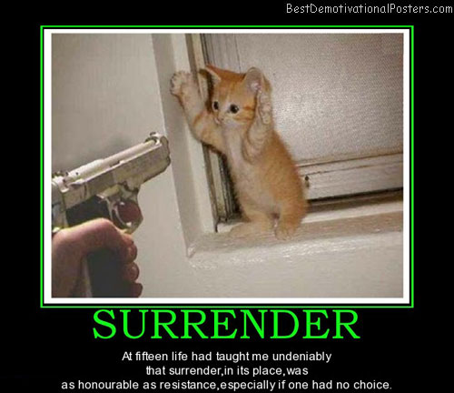 surrender-cat-best-demotivational-posters