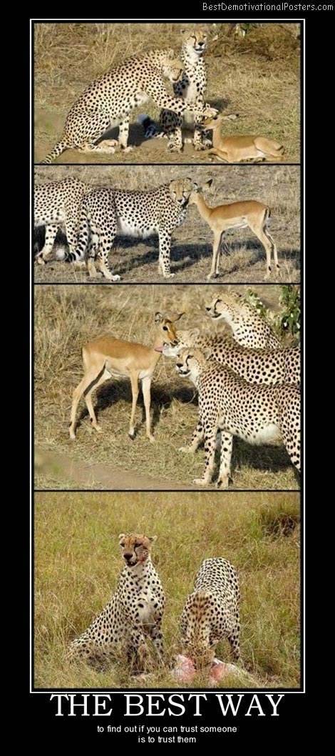 the-best-way-antelope-cheetahs-best-demotivational-posters