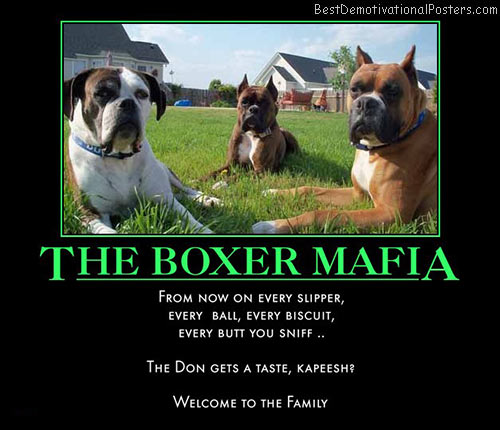 the-boxer-mafia-best-demotivational-posters
