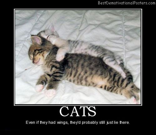 Cats cute wings best demotivational posters