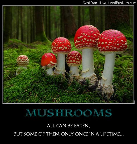 mushrooms-eat-once-best-demotivational-posters