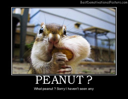 peanut-chipmunk-animals-best-demotivational-posters