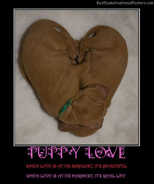 puppy-love-dog-simple-best-demotivational-posters