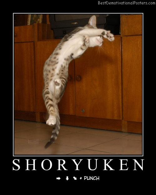 Shoryuken Cat Punch