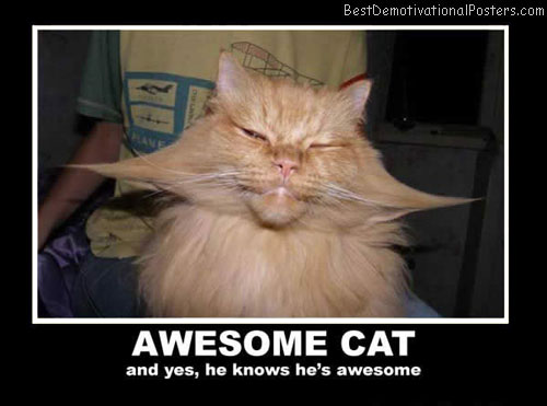 awesome-cat best-demotivational-posters