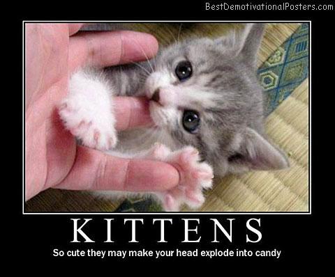 cat-kittens cute best-demotivational-posters