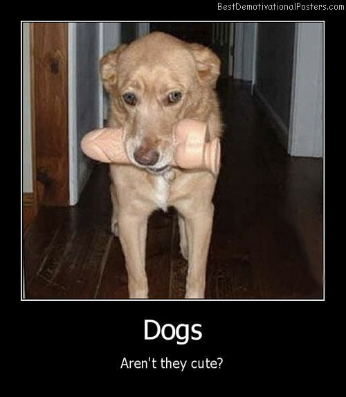 cute dogs best-demotivational-posters