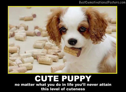 cute puppy cuteness best-demotivational-posters