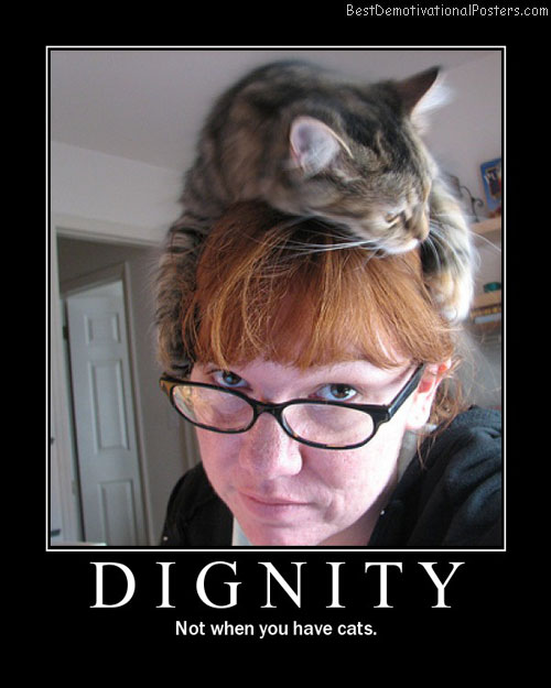 dignity cats best-demotivational-posters