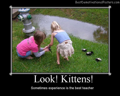 look kittens best-demotivational-posters