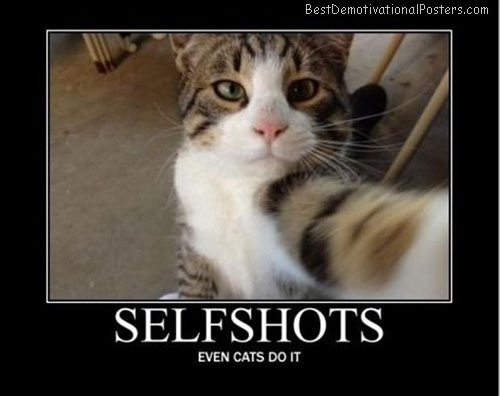 selfshots even-cats best-demotivational-posters