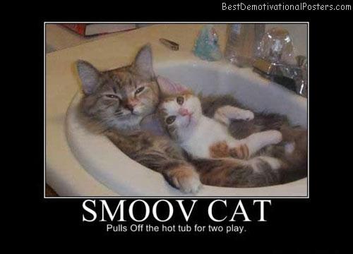 smoov-cat best-demotivational-poster