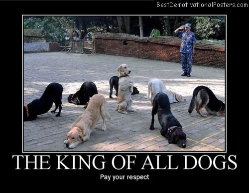 the king off all dogs best-demotivational-posters