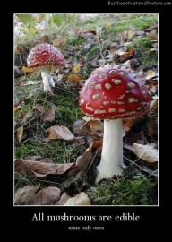 All Mushrooms Are Edible Best Demotivational Posters