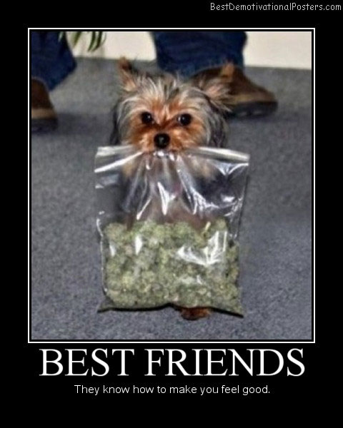 Best Friends Best Demotivational Posters