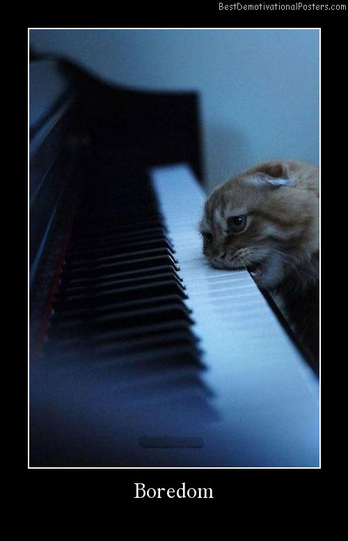 Boredom piano cats Best Demotivational Posters