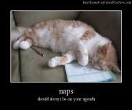 Cat Naps agenda Best Demotivational Posters