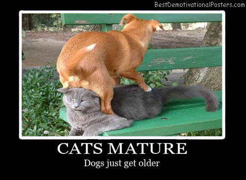 Cats Mature Best Demotivational Posters