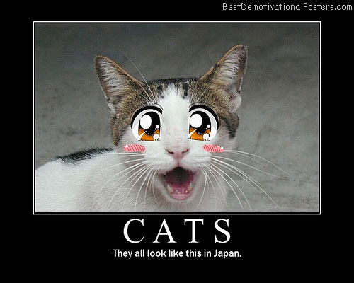 Cats-in-Japan Best Demotivational Posters