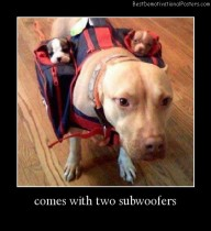Comes With Two Subwoofers Best Demotivational Posters