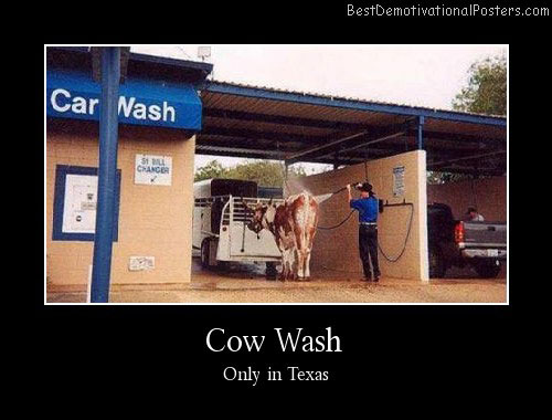 Cow Wash Best Demotivational Posters
