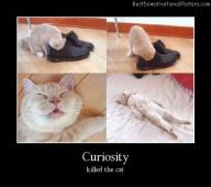 Curiosity Cat Best Demotivational Posters