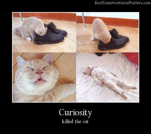 Funny Curiosity Cat Demotivational Poster