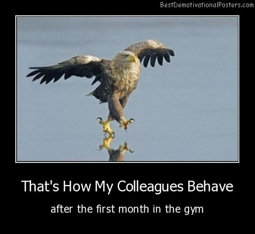 Funny Eagle Behave Demotivational Poster