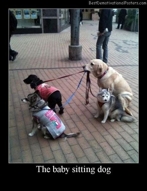 The Baby Sitting Dog Best Demotivational Posters