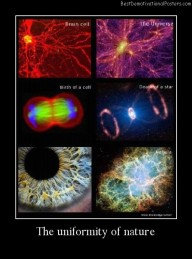 The Uniformity Of Nature Best Demotivational Posters