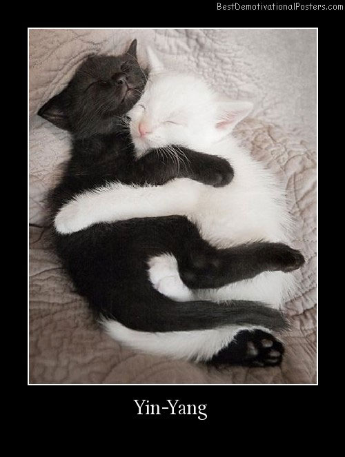 Yin-Yang cats cute Best Demotivational Poster