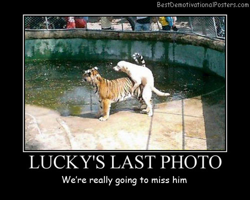 Lucky's Last Photo Best Demotivational Posters