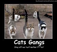 Cats Gangs