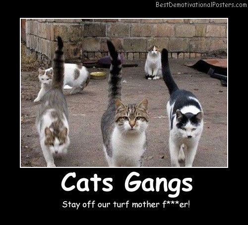 Cats Gangs Best Demotivational Posters