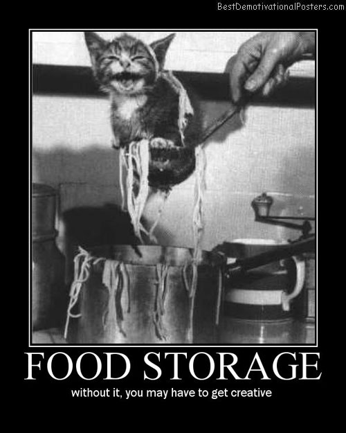 Food Storage cat cute Best Demotivational Posters