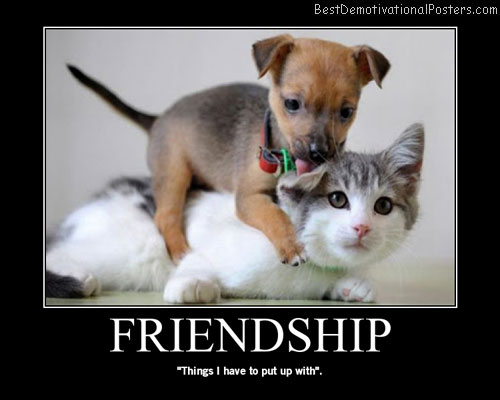 Friendship dog cat Best Demotivational Posters