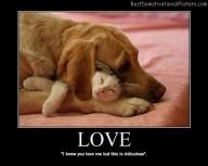 Love dog cat Best Demotivational Posters
