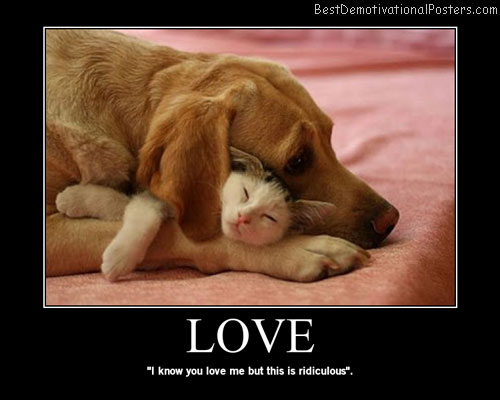 Love dog cat Best Demotivational Posters