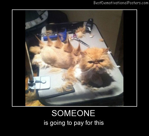 Someone Cat Best Demotivational Posters