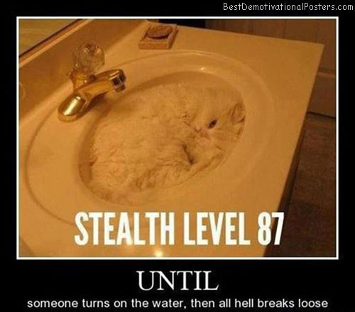 Stealth Level 87 cat Best Demotivational Posters